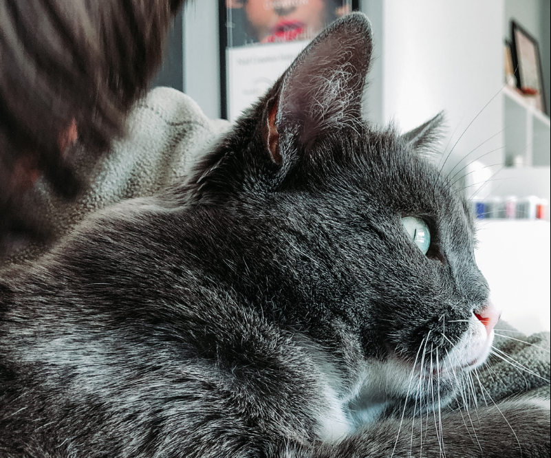dr judy karnia dvm scottsdale cat clinic arizona