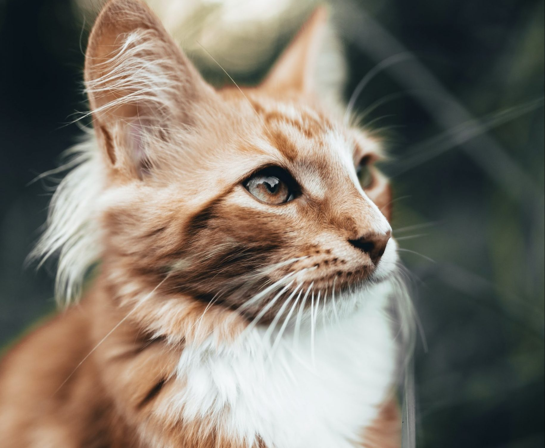 what to do if your cat has multiple health problems